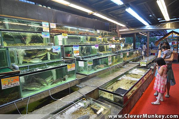 Lobster Promotion Bali Hai Seafood Village Kota Damansara