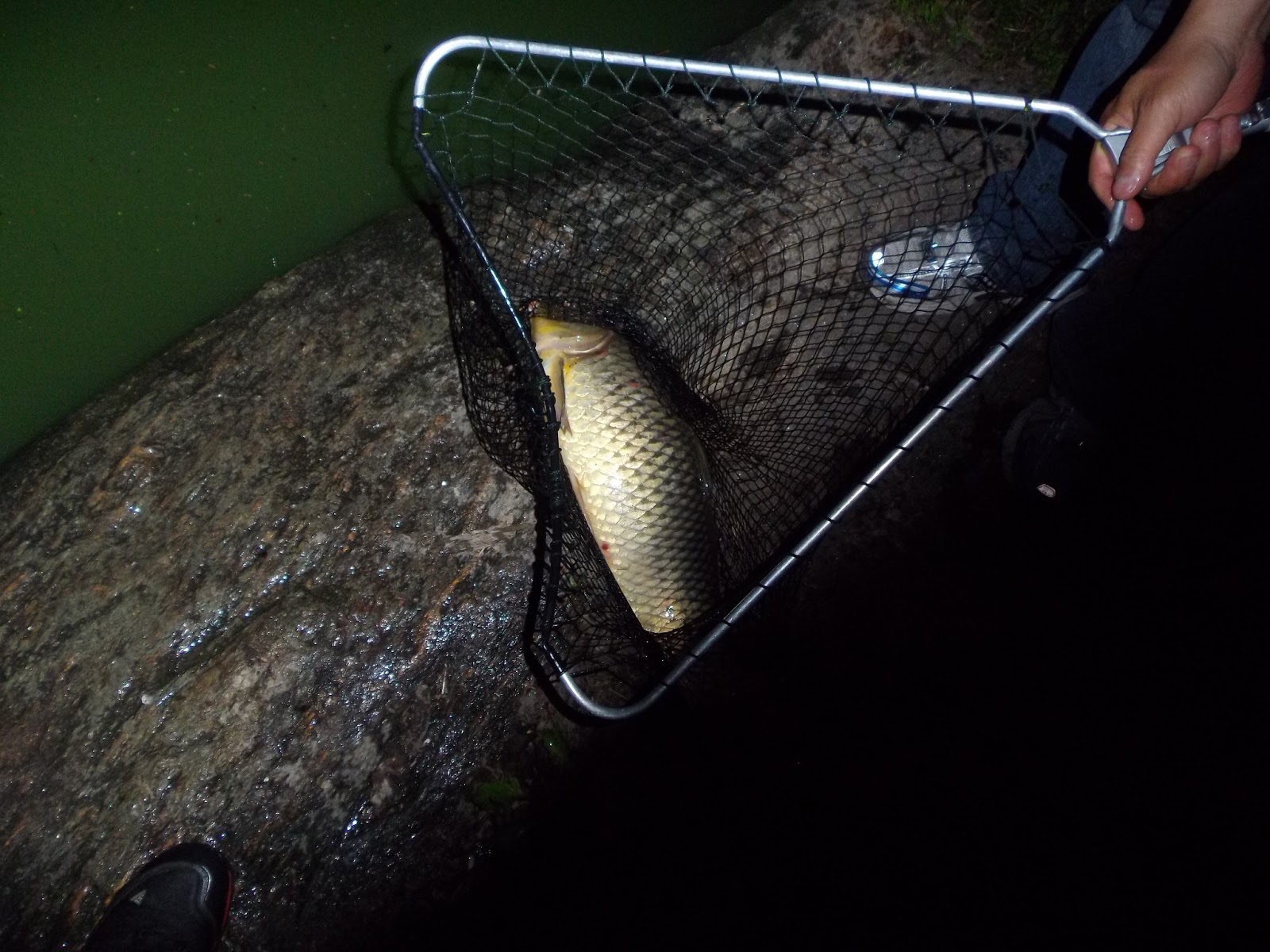 Dry fly fishing for carp the great lakes of nyc for Fly fishing carp
