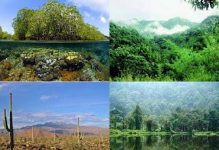 Pengertian Keanekaragaman Makhluk Hidup dan Contohnya
