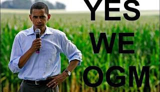 Legalizzata l'assenza di controlli sugli OGM