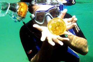 jellyfish in maratua, diving in maratua island, villa in maratua