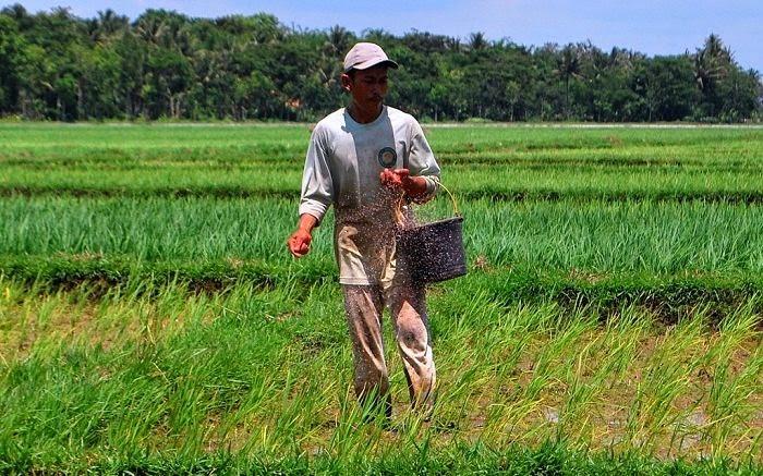 Strategi Jokowi Jk Di Sektor Pertanian Pusat Ilmu Pertanian