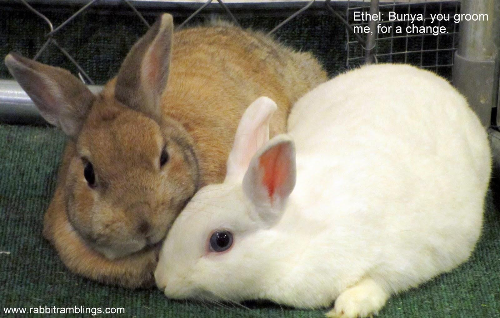 Rabbit Ramblings: RR Funny Bunny Memes