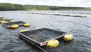 Com apoio da Codevasf, piscicultura familiar gera trabalho e renda em Coruripe