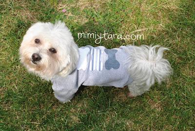 patron de ropa para perro