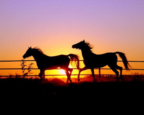 Wallpaper kuda dan matahari terbenam