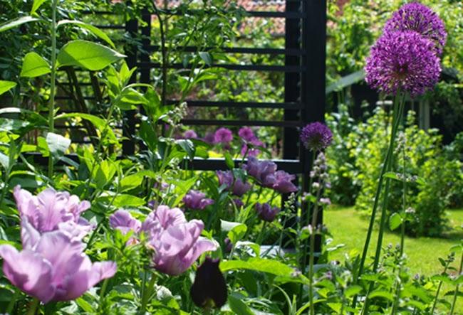 Moderne have med mindre haverum har sorte trælister i haven og bede i lilla og blå farver