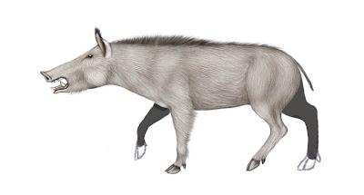 suidae fosil Conohyus