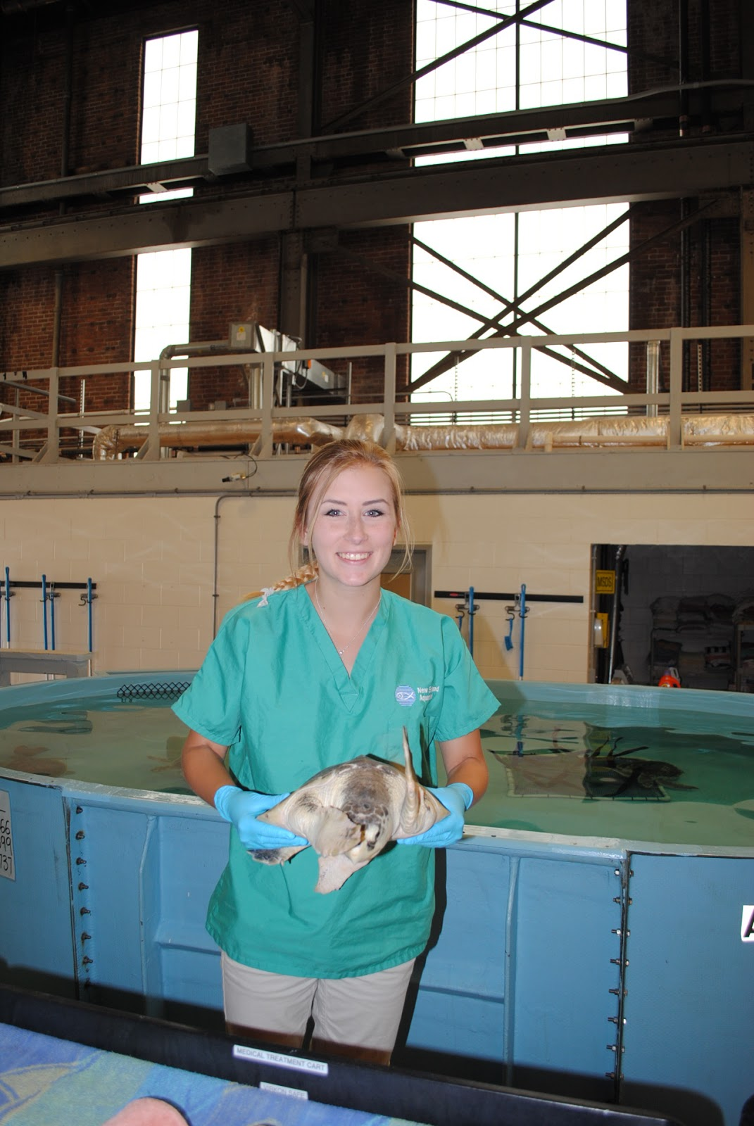 Marine Animal Rescue Team Blog