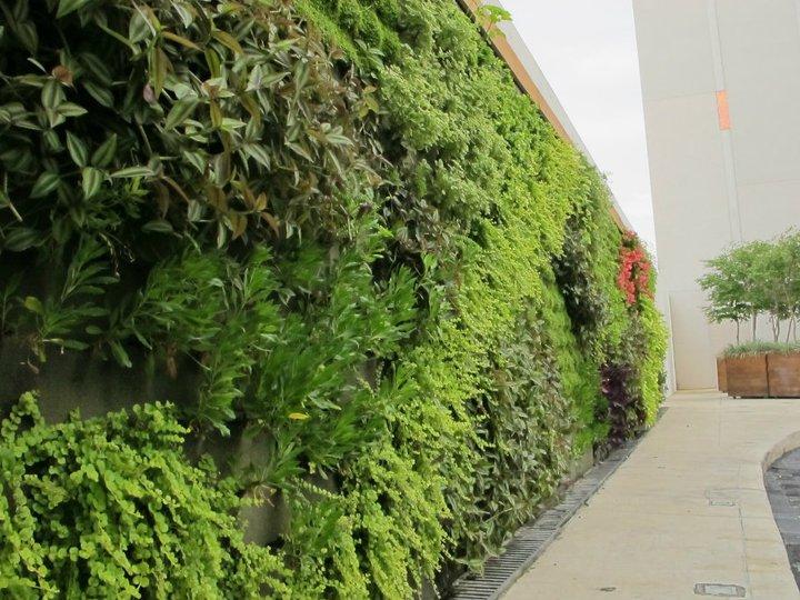 Vida verde muro verde andares Jardines verticales baratos