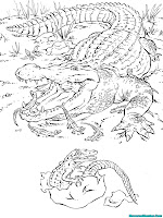 Mewarnai Gambar Induk Alligator Dan Anak Alligator