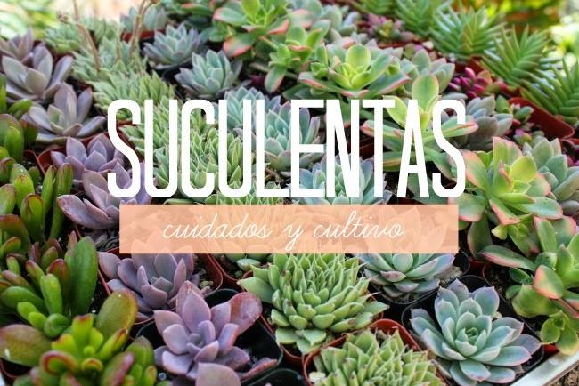 suculentas cultivo y cuidados experimento casa On plantas suculentas cuidados