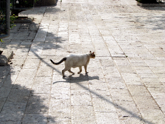Cat in Liberty Bell Park in Jerusalem Israel