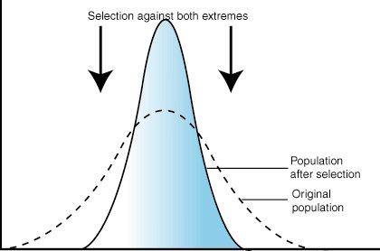 stabilləşdirici seçim evrim ile ilgili görsel sonucu
