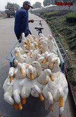 élő állat szállítás 2
