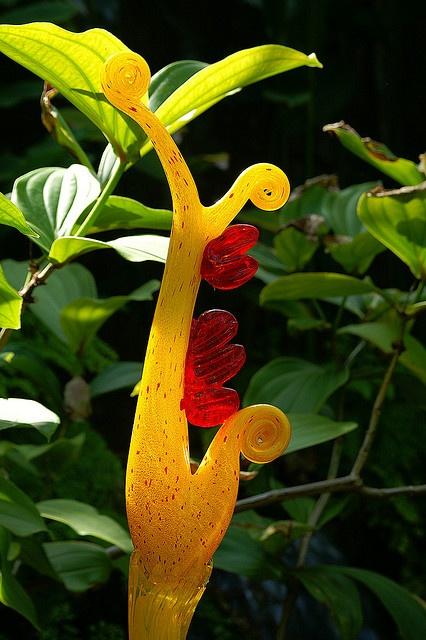 Редкие тропические цветы