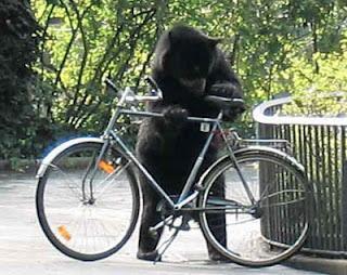 Funny American Black Bear