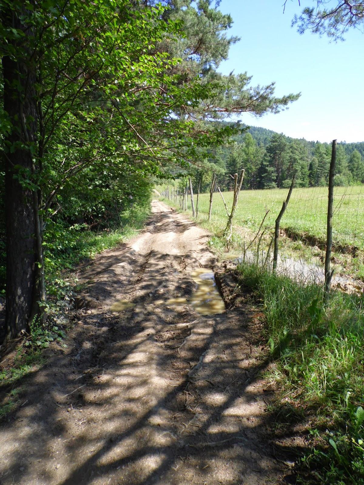 Szlak z Muszyny na Jaworzynę Krynicką - błotnisty kawałek