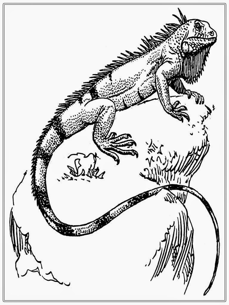 Printable iguana adult coloring pages realistic coloring for Iguana coloring pages