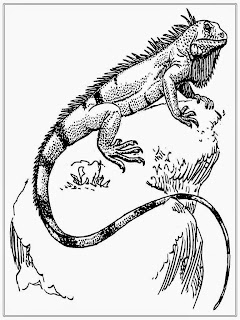 Realistic Iguana Coloring Pages For Adult