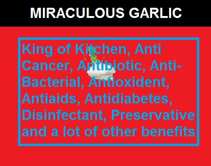 Garlic-The Miraculous Herb, king of kitchen