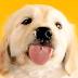 Wallpaper com filhotinho de cachorro que lambe a tela do seu celular