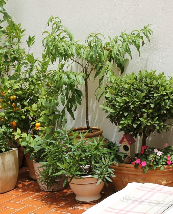 Ideas para un huerto urbano melocotones en un gran - Jardineras huerto urbano ...