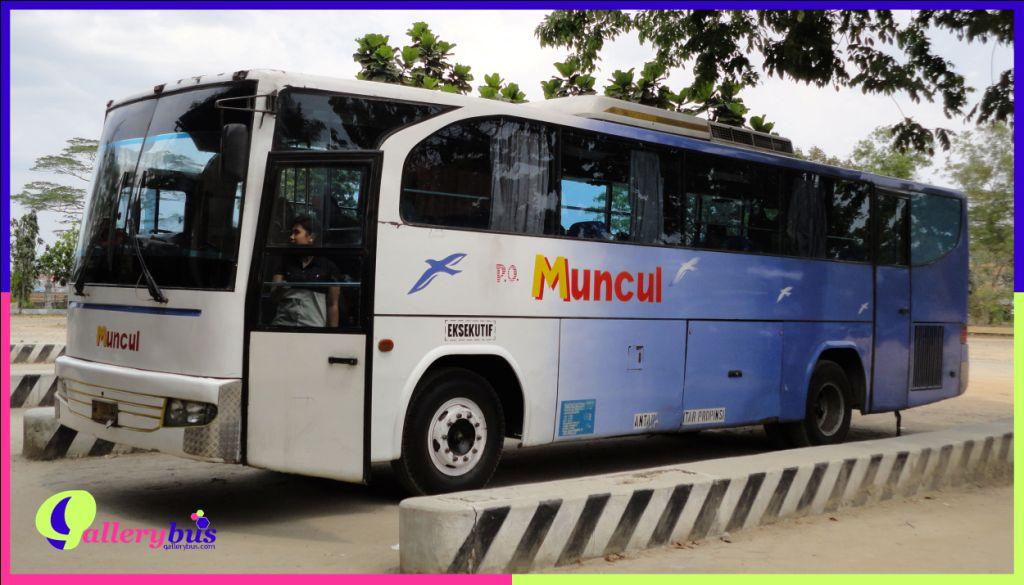 PO Muncul - Travego by Suryana | Mercedes-Benz Bus