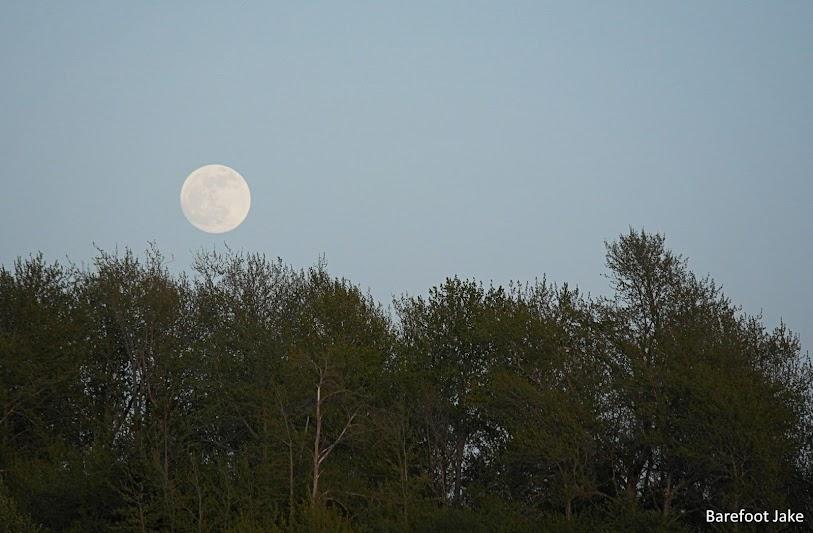 moon rising elwha