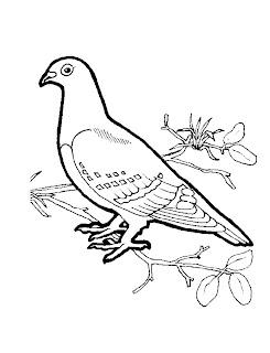 Dibujos de Aves