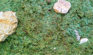 Hidromulch con semillas germinadas.