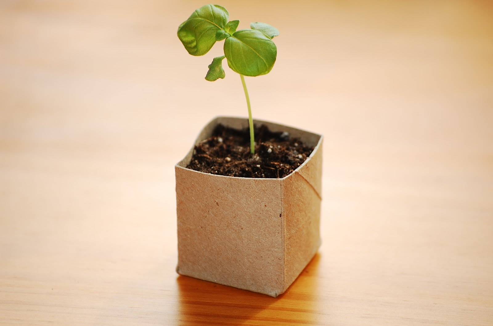 Kendollmade Repurposed Toilet Paper Roll Seed Starter Pots