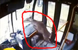 Raw video: Deer crashes through bus windshield