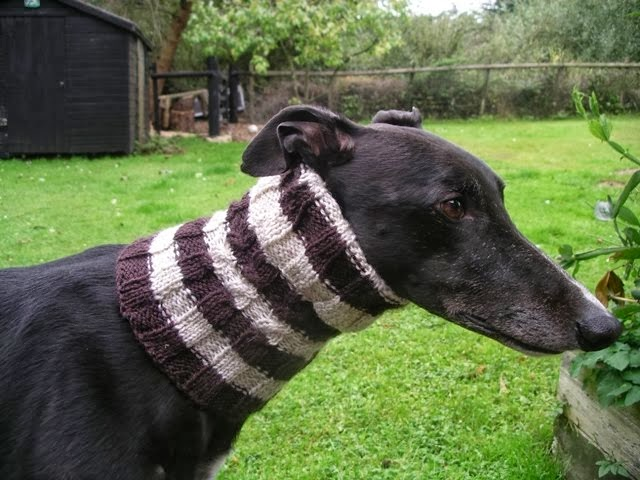 Greyhound/Galgo Snoods