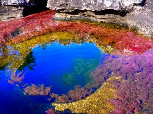 caño-cristales-río-más-hermoso-del-mundo