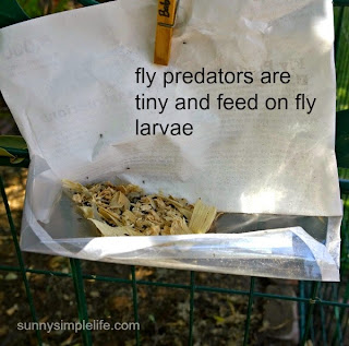 fly predators, spalding labs, flies in the chicken coop and how to get rid of them