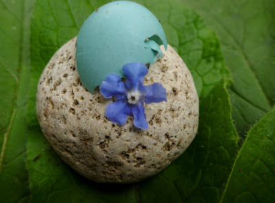 Rock, robin's shell, and borage flower and leaves