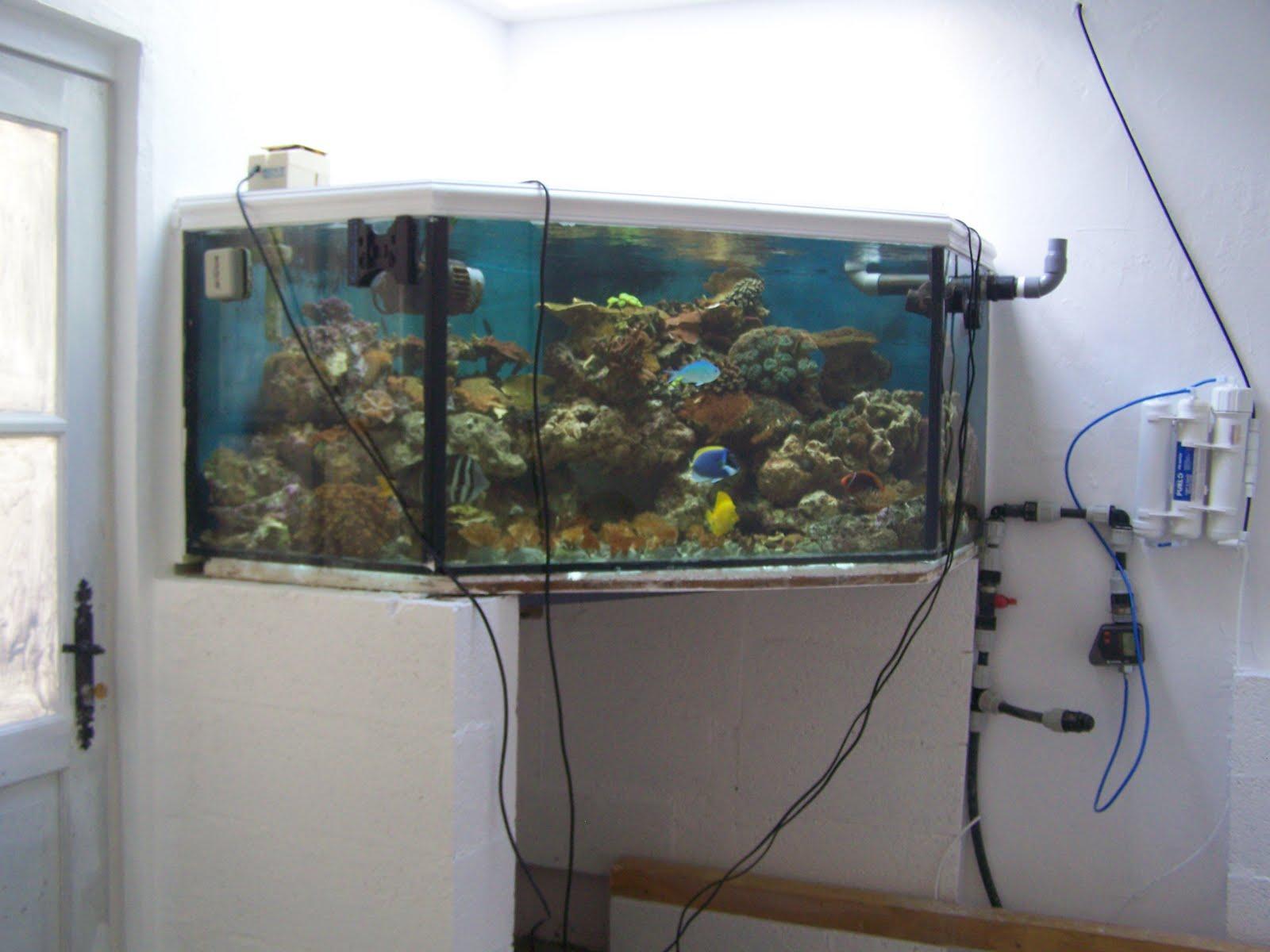 reef aquarium inc projet syst me 3000 litres. Black Bedroom Furniture Sets. Home Design Ideas