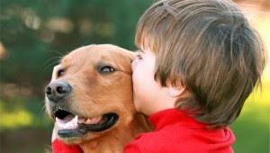 Brindale compañía a tu perro