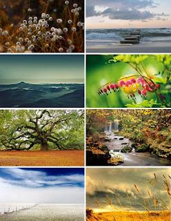 природа обои макро пейзаж