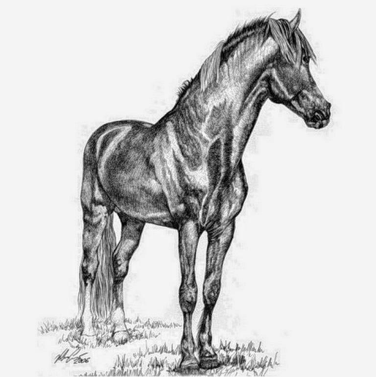 imagenes-caballos-en-dibujos