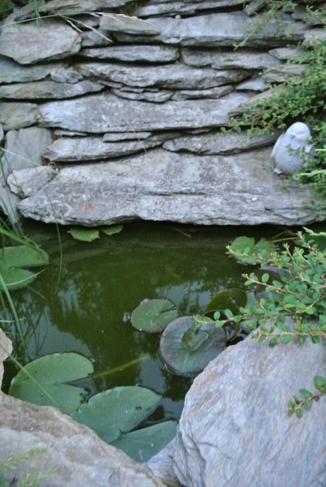 kaskada,łupek,rośliny do oczka,Szczecin,woda w oczku,blog domowy,lifestyle,kamienie,skalniak,ogród,dom i ogród