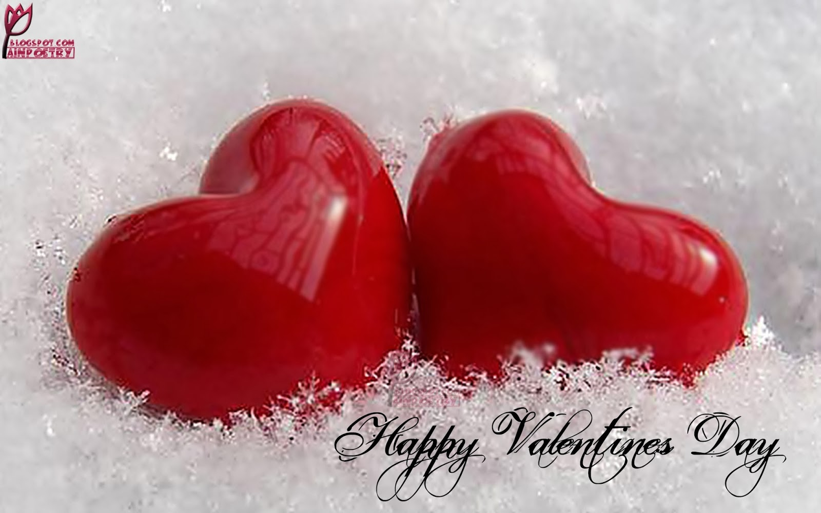 Loving Two Hearts In Valentines Day Image Wallpaper Photo Image HD