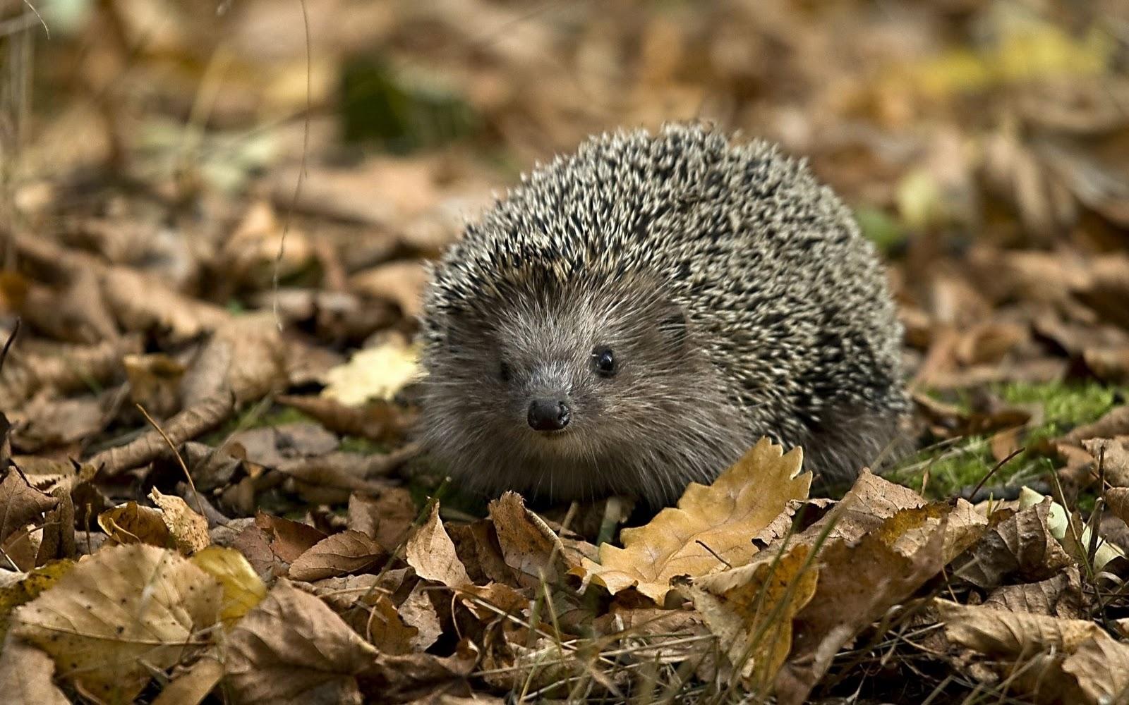 http://4.bp.blogspot.com/-3EXenMgBkuM/Tv8RYfXArYI/AAAAAAAAa6Y/1JcIpFUWYYE/s1600/Animals+Wallpapers+%252886%2529.jpg