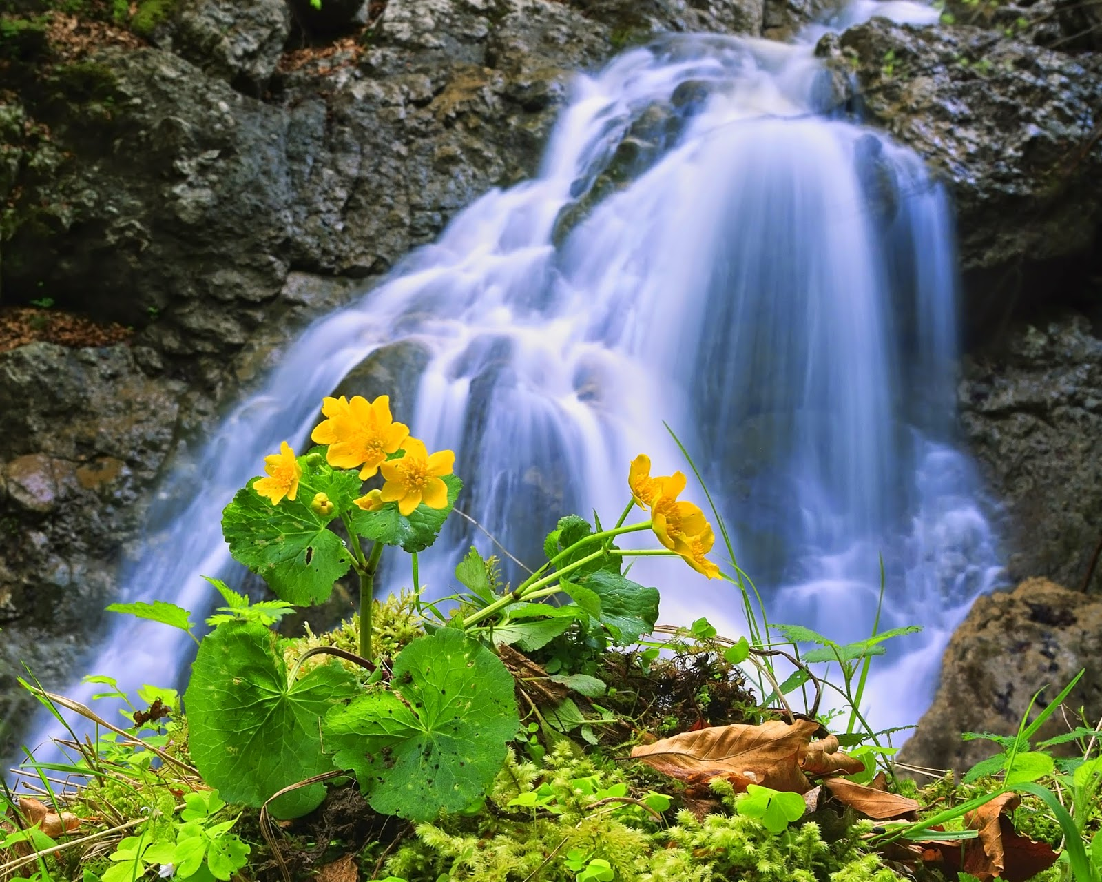 beautiful nature images: waterfall with flowers | beautiful nature