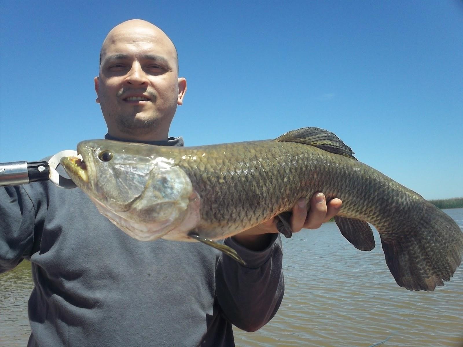 Pesca en el Río de la Plata: Taruchusaurus Rex!!