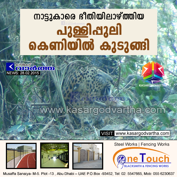 Mangalore, Natives, House, Leopard, The leopard that had been giving sleepless nights to the people living in Mulky revenue division in the taluk for the last nearly 18 months was finally found to have been stuck in a trap at Elinje Shuntipady hillock near Kinnigoli, Leopard that had harassed people for 18 months finally caught.