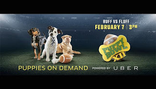 You can Uber Puppies Today To Meet the Puppy Bowl 2016 Contenders