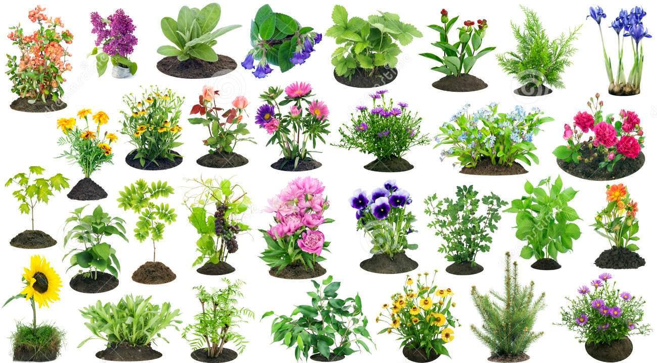 C mo cuidar a los animales y plantas en el corregimiento - Como cuidar las plantas de exterior ...