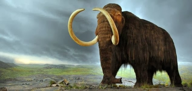 Giant prehistoric mammals feasted on flowers